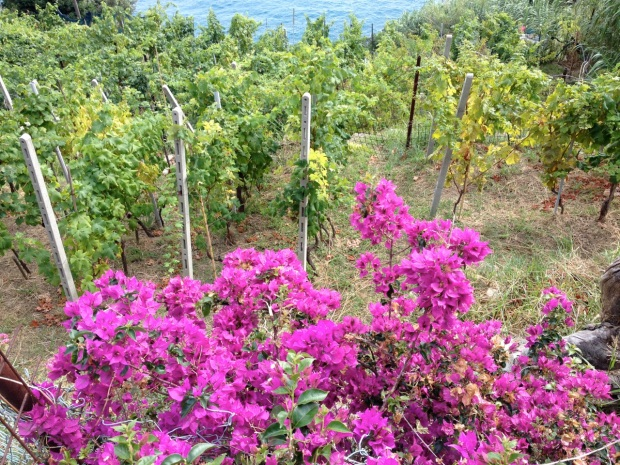 Bouganvilla and grapes